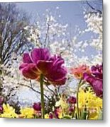 Tulips At Dallas Arboretum V46 Metal Print