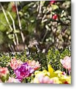 Tulips At Dallas Arboretum V47 Metal Print