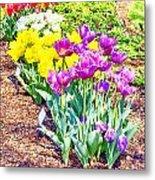 Tulips At Dallas Arboretum V65 Metal Print