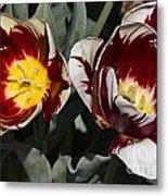 Tulips At Dallas Arboretum V92 Metal Print