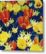 Tulips Blue Metal Print