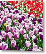 Tulips Field Metal Print