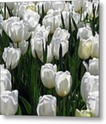 Tulips - Field With Love 19 Metal Print