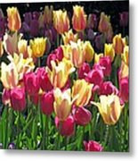 Tulips - Field With Love 35 Metal Print