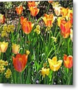 Tulips - Field With Love 41 Metal Print