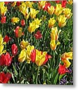 Tulips - Field With Love 49 Metal Print