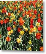 Tulips - Field With Love 50 Metal Print