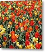 Tulips - Field With Love 51 Metal Print