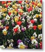 Tulips - Field With Love 57 Metal Print
