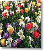Tulips - Field With Love 58 Metal Print