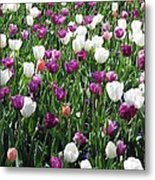 Tulips - Field With Love 60 Metal Print