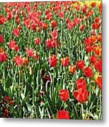 Tulips - Field With Love 61 Metal Print