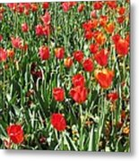 Tulips - Field With Love 62 Metal Print