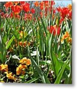 Tulips - Field With Love 64 Metal Print