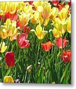 Tulips - Field With Love 65 Metal Print