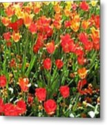 Tulips - Field With Love 68 Metal Print