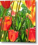 Tulips - Field With Love 69 Metal Print