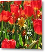 Tulips - Field With Love 71 Metal Print