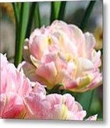 Tulips Flowers Garden Art Prints Pink Tulip Floral Metal Print