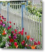 Tulips Garden Along White Picket Fence Metal Print