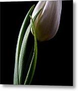Tulips IIi Metal Print