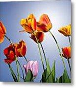 Tulips In Sun Light Metal Print