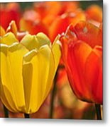 Tulips In The Midst Metal Print