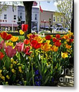 Tulips In The Spring Metal Print