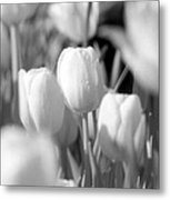 Tulips - Infrared 10 Metal Print