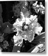 Tulips - Infrared 24 Metal Print