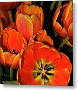 Tulips Of Fire Metal Print
