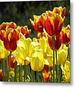 Tulips Of Germany Metal Print