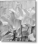 Tulips Oxford Metal Print