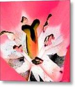 Tulips - Perfect Love - Photopower 2075 Metal Print