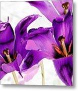 Tulips - Perfect Love - Photopower 2081 Metal Print
