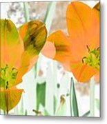 Tulips - Perfect Love - Photopower 2083 Metal Print