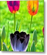 Tulips - Perfect Love - Photopower 2168 Metal Print