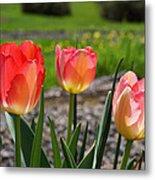 Tulips Red Pink Tulip Flowers Art Prints Metal Print