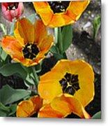 Tulips Tp Metal Print