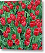 Tulips Tulips And Tulips Metal Print