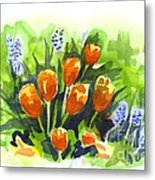 Tulips With Blue Grape Hyacinths Explosion Metal Print