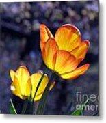 Tulips With Purple Bokeh Metal Print