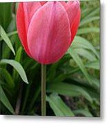 Tuliptime Metal Print