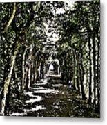 Tunnel Of Trees ... Metal Print