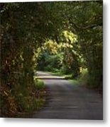 Tunnel Of Trees And Light Metal Print