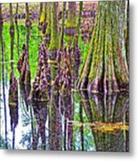 Tupelo/cypress Swamp Reflection At Mile 122 Of Natchez Trace Parkway-mississippi Metal Print