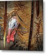 Turkey And Feathers Metal Print