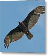 Turkey Buzzard 1 Metal Print