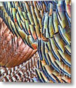 Turkey Feather Colors Metal Print