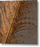 Turkey Feather Metal Print
